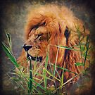 A Lion portrait by AD-DESIGN