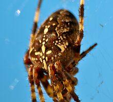 Spider by Markus Landsmann