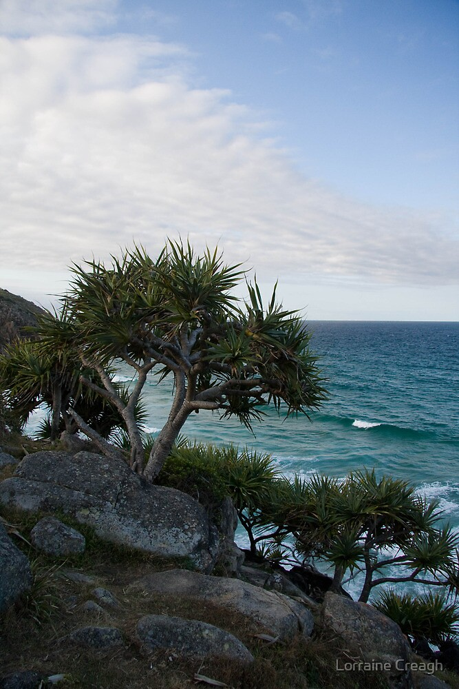 Little Bay by Lorraine Creagh