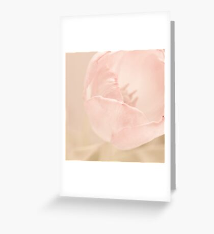 tulip. Greeting Card