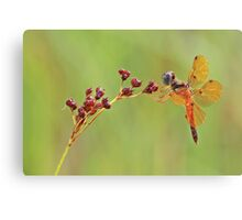 Eastern Amber Wing Dragonfly Canvas Print