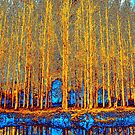 Birch Trees by Les Sharpe