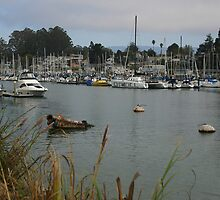 SANTA CRUZ HARBOR by fsmitchellphoto