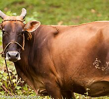 Holy Cow (Udderly Beautiful) by Leslie  Hagen