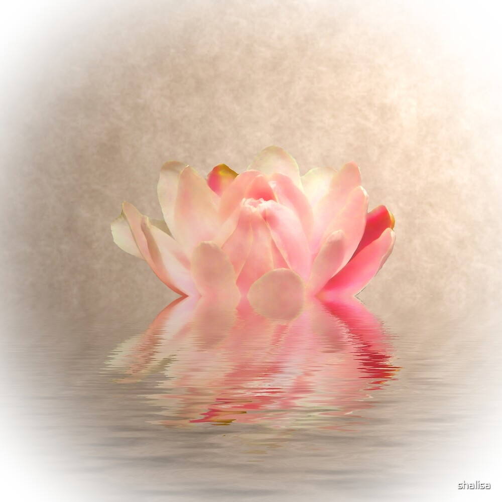Waterlily by shalisa