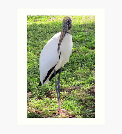 Wood Stork, Full Body  Art Print