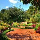 Joyful Pathway by Kathy Baccari