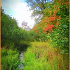 Tributary to Lake Romona by TrendleEllwood