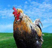 Giant Chicken II by Tiffany Muff