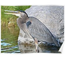 Heron yodelling Poster