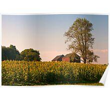 Sunflower Field, Evening Poster