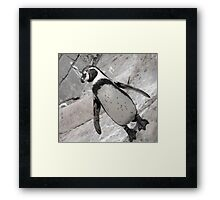 typical penguin Framed Print