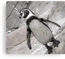 typical penguin Canvas Print