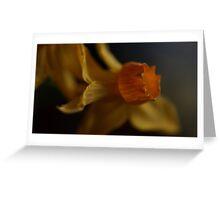 Macro daffodil Greeting Card