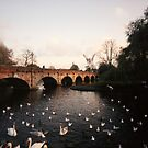 Swans #2 landscape idillic surreal river england by Tara Holland