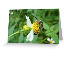 FLOWER WASP IN SPANISH NEEDLES Greeting Card