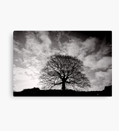 Tree of Triumph - landscape- Kenilworth - Great Britain Canvas Print