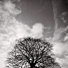 Tree of Triumph - portrait - Kenilworth - Great Britain by Norman Repacholi
