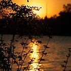 Sunset Behind Leaves by lindsycarranza