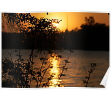 Sunset Behind Leaves Poster