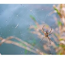 On a Web Photographic Print