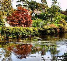 Mount Usher Gardens by evisonphoto