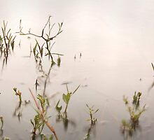 Reeds Throughout  by Adam Vincent