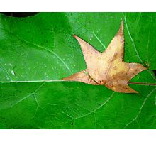 Fallen Star Photographic Print