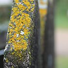 Lichen Post by Kathi Arnell