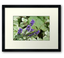 Purple Reach Framed Print