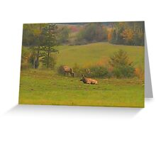 Tuckered Out Bull Elk Greeting Card
