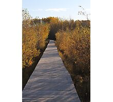 Coloured Boardwalk Photographic Print