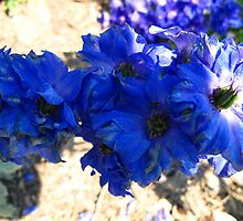 Fall Delphinium by MarianBendeth
