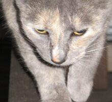 Feline on the Hunt ?  Sticker