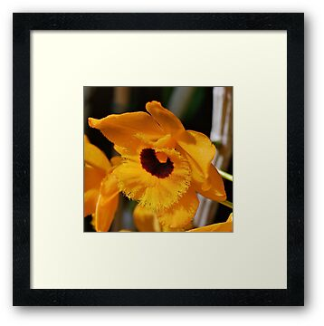 Eye of an Orchid by Penny Smith
