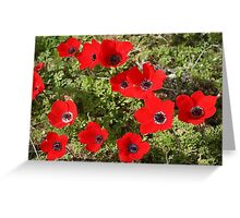 Red Wild Anemone Flowers  Greeting Card