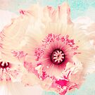Pastel poppy  by AD-DESIGN