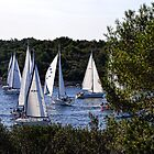 Sailboats Getting Ready To Race by lynn carter