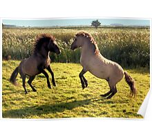 Jumping Konik Horses Poster