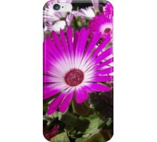 Pink And White Gazania Flowers iPhone Case/Skin
