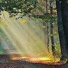 Lightthought 131 by Lightthinker