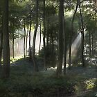 Morning Sun Light in the Woods by Photokes