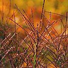 Fall Grass by Lynn Gedeon