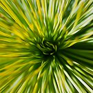 Grass Tree by Peter Gray