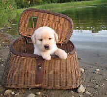 Let's go fishing! by DennisThornton