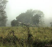 Morning Fog by Tim Bell