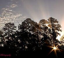 Shining Through by Tim Bell