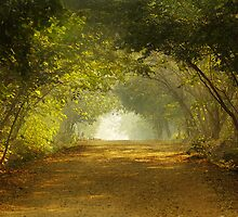Come, walk with me!!! by Prasad