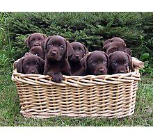A basket of Chocolates! Photographic Print