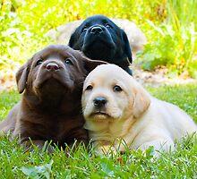 Another Trio! by DennisThornton